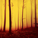 Fire red saturated foggy forest landscape Stock Images