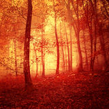 Fire red saturated mystic forest. Light scene background royalty free stock photography