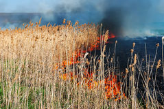 Fire reeds Royalty Free Stock Images