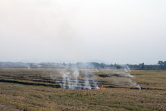 Fire in a rice crop Stock Images