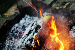 Fire roasted apples. Campfire in forest Stock Photography