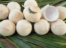 Burned coconut on coconut leaves stock image