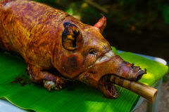 Fire-roasted suckling pig served on banana leaves. Filipino food
