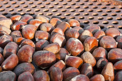 Fire roasting chestnuts Royalty Free Stock Photography