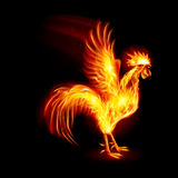 Fire Rooster Stock Images
