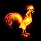 Fire Rooster Stock Photo