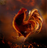 Fire rooster.Symbol of  new year 2017. Chinese zodiac  year of rooster Royalty Free Stock Images