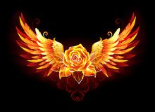 Fire rose with wings on black background vector illustration