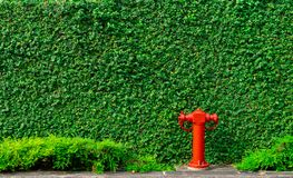 Fire safety pump on texture background of green leaves of ivy wall in the city on concrete floor. Deluge system of firefighting. System. Plumbing fire stock images