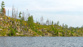 Fire Scarred Ridge in the North Woods Royalty Free Stock Image