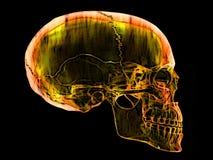 Fire skull illustration Stock Images