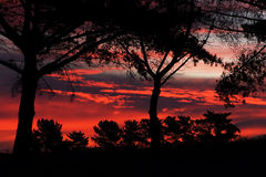Fire in the sky. Trees silhouetted by the firey sunset sky Stock Photography