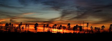 Fire in the Sky. A sunset behind some trees leaves the impression of fire in the sky Royalty Free Stock Photography