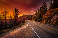 Fire in the Sky. In Sequoia Royalty Free Stock Photography