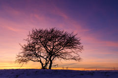 Fire in the sky. Solitary tree against vivid winter sunset background Royalty Free Stock Photo