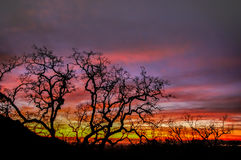 Fire Sky Tree Silhouette. Fremont Peak State Park, San Benito County and Monterey County, California, USA stock images