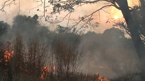 Fire and smoke on dry grass stock video footage