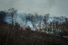 Fire and smoke in the forest Stock Photography