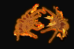 Fire spiders. Spiders of fire in a fierce battle Stock Photo