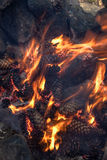 Fire of spruce and pine cones Stock Photo