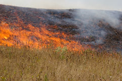 Fire in steppe. In hot weather Stock Image