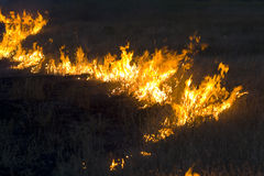 Fire in steppe Stock Photos