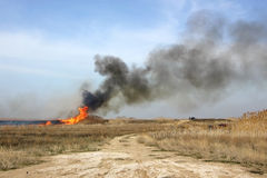 Fire in the steppe. Burning dry reeds Royalty Free Stock Images