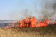 Fire in steppe  Royalty Free Stock Photo