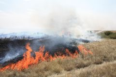 Fire in steppe  Stock Photography