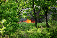 Fire in summer forest Royalty Free Stock Image