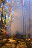 Fire in summer forest in Russia Royalty Free Stock Photography