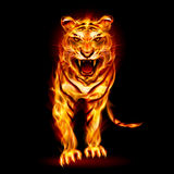 Fire tiger. Illustration on black background for design Stock Photography