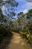 Fire trail in the Australian bush. Fire trails in the Australian bush are dirt roads that allow fire brigades to easily enter at the source of a bush fire stock photos