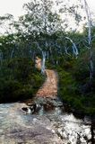 Fire trail in the Australian bush. Fire trails in the Australian bush are dirt roads that allow fire brigades to easily enter at the source of a bush fire stock images
