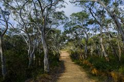 Fire trail in the Australian bush Stock Photos