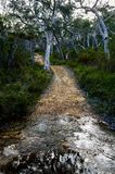 Fire trail in the Australian bush. Fire trails in the Australian bush are dirt roads that allow fire brigades to easily enter at the source of a bush fire stock image