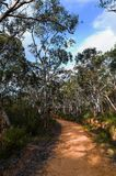 Fire trail in the Australian bush. Fire trails in the Australian bush are dirt roads that allow fire brigades to easily enter at the source of a bush fire stock photo