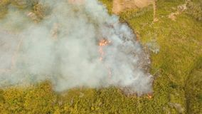 Fire in a tropical bush. Forest fire on slopes hills and mountains, bush. Forest and tropical jungle deforestation for human food farming and export. large stock footage