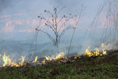 The fire was burning last year's dried plants Stock Images