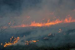 The fire was burning last year's dried plants Stock Image