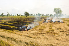 Fire was burning straw. Royalty Free Stock Image