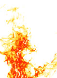 Fire on white royalty free stock images