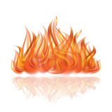 Fire on white background. Royalty Free Stock Image