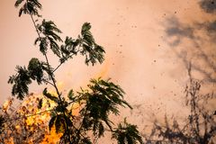 fire. wildfire, burning pine forest in the smoke and flames stock images