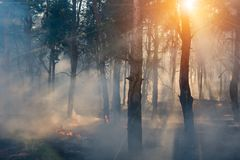 Fire. wildfire at sunset, burning pine forest in the smoke and flames. Fire. wildfire at sunset, burning pine forest in the smoke and flames stock image