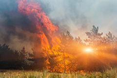 Fire. wildfire at sunset, burning pine forest in the smoke and flames. Fire. wildfire at sunset, burning pine forest in the smoke and flames royalty free stock image