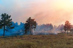 Fire. wildfire at sunset, burning pine forest in the smoke and flames.  stock photos