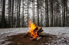Fire in the winter forest Stock Image