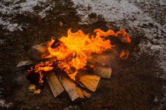 Fire in the winter forest Royalty Free Stock Images