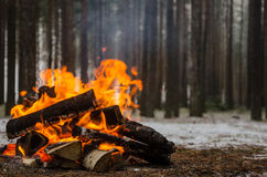 Fire in the winter forest Royalty Free Stock Photography